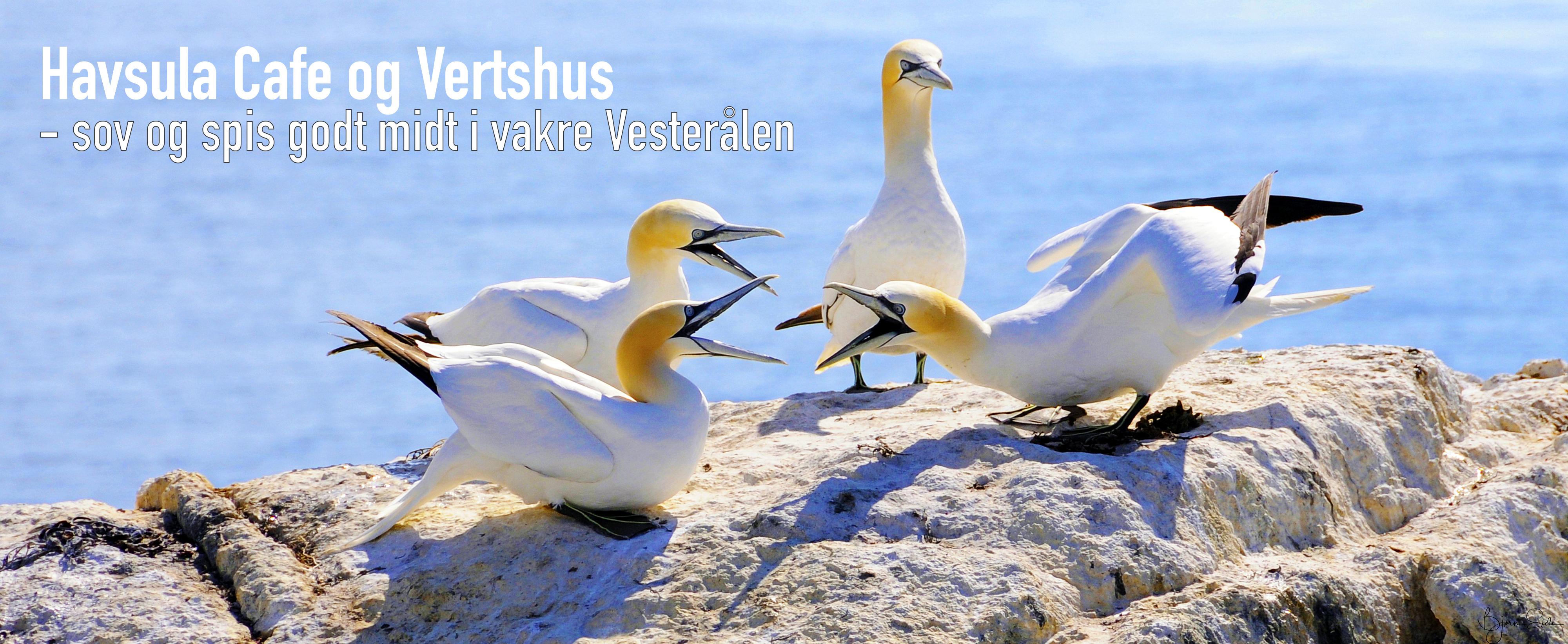Havsula Cafe og Vertshus